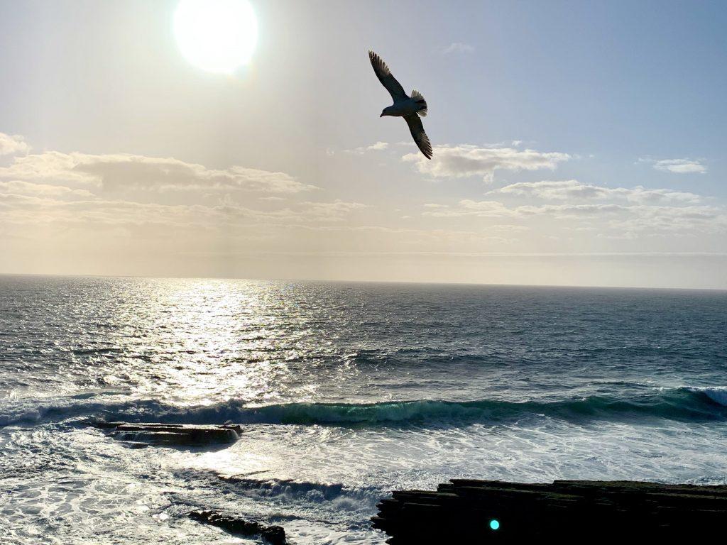 sea with bird